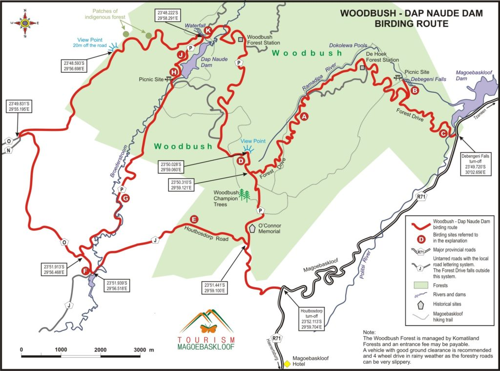 Wood bush Birding route. Forest Drive into Woodbush Forest